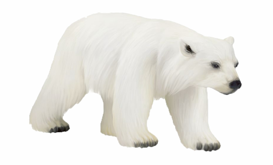 Polar Bear Png Photos.
