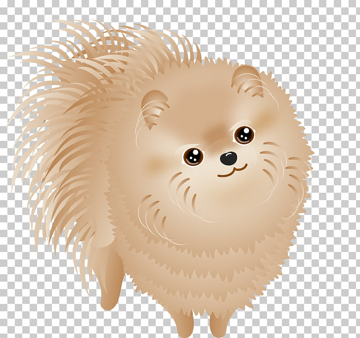 Pomeranian Dog breed Puppy Non.