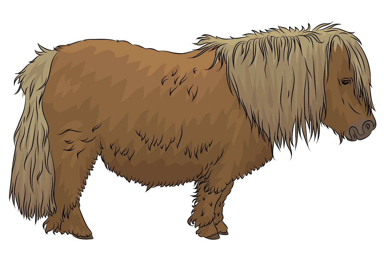 Shetland Pony clipart. Free download..