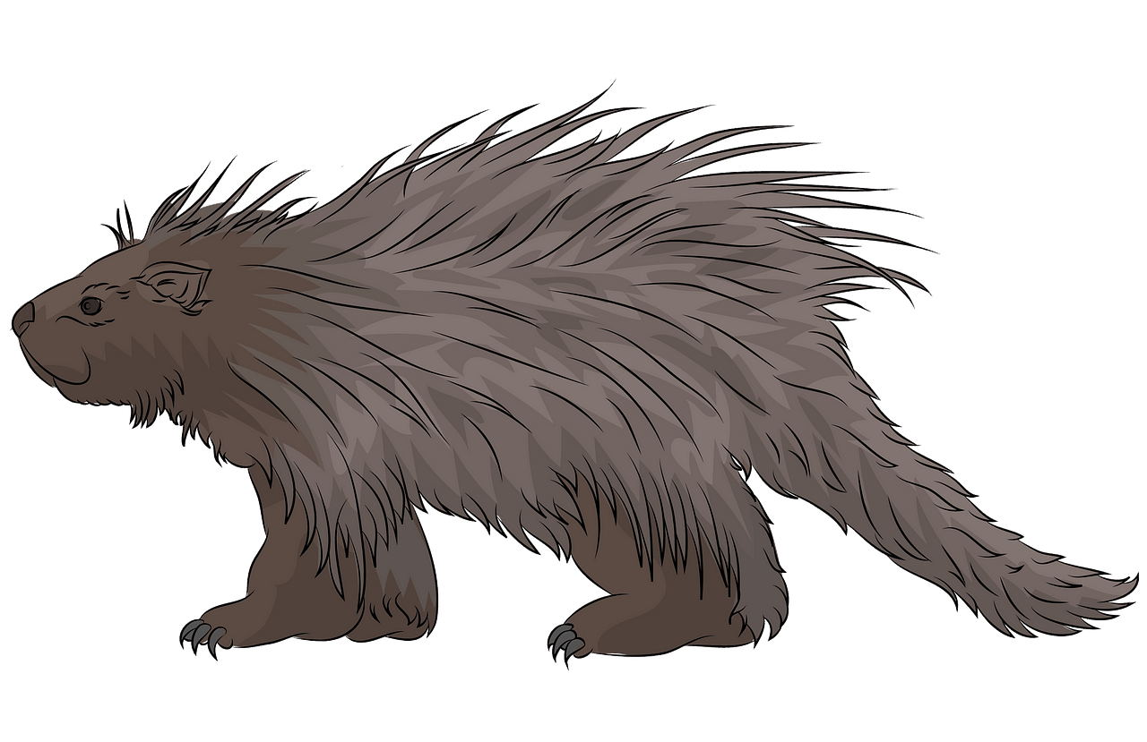 Porcupine clipart. Free download..