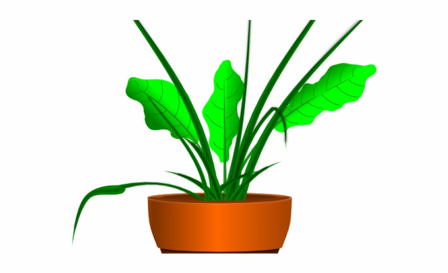 Potted Plants Clipart Aloe Vera.