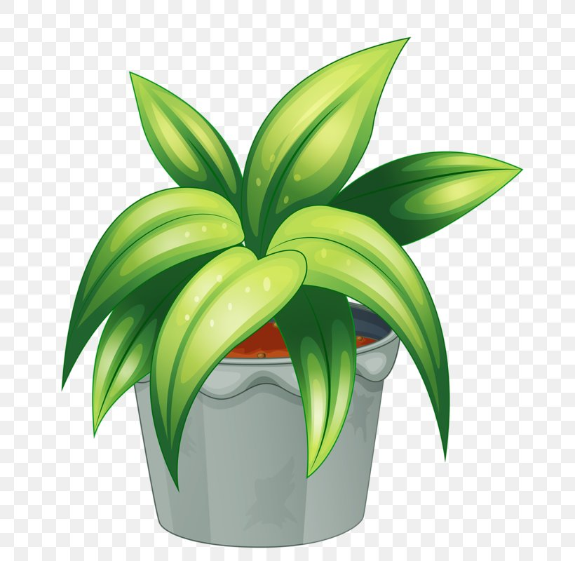 Flowering Plant Clip Art, PNG, 747x800px, Plant, Drawing.