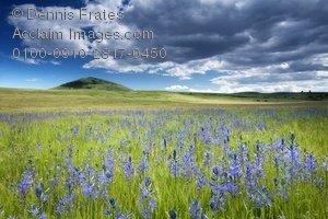 Clipart prairie 1 » Clipart Portal.