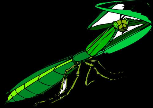 Green praying mantis.