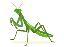 Search Results for praying mantis.