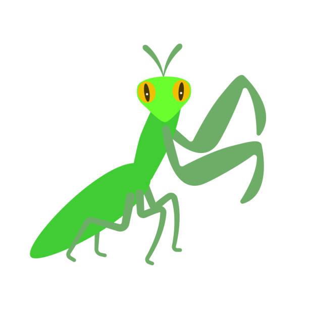 Best Praying Mantis Illustrations, Royalty.