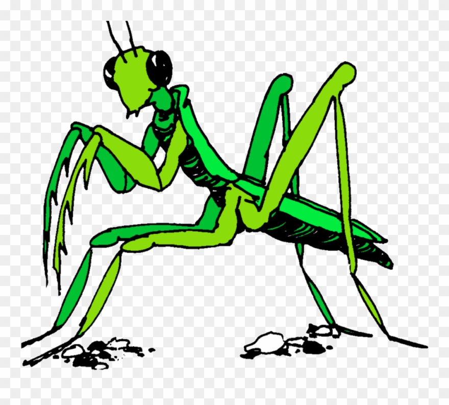 Praying Mantis Clipart Stick Insect.