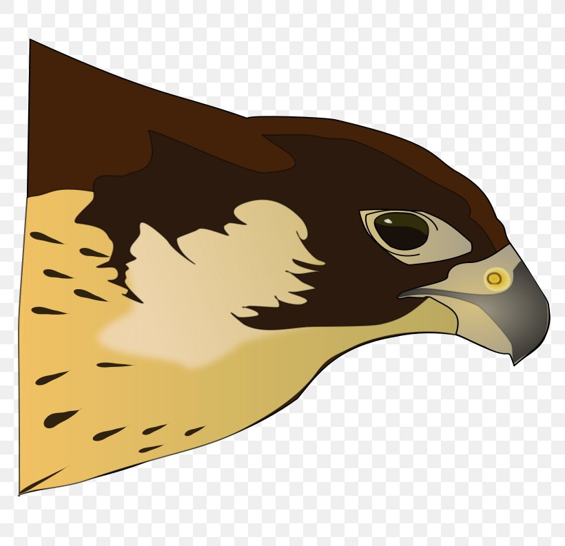 Bird Of Prey Hawk Clip Art, PNG, 800x793px, Bird, Beak, Bird.