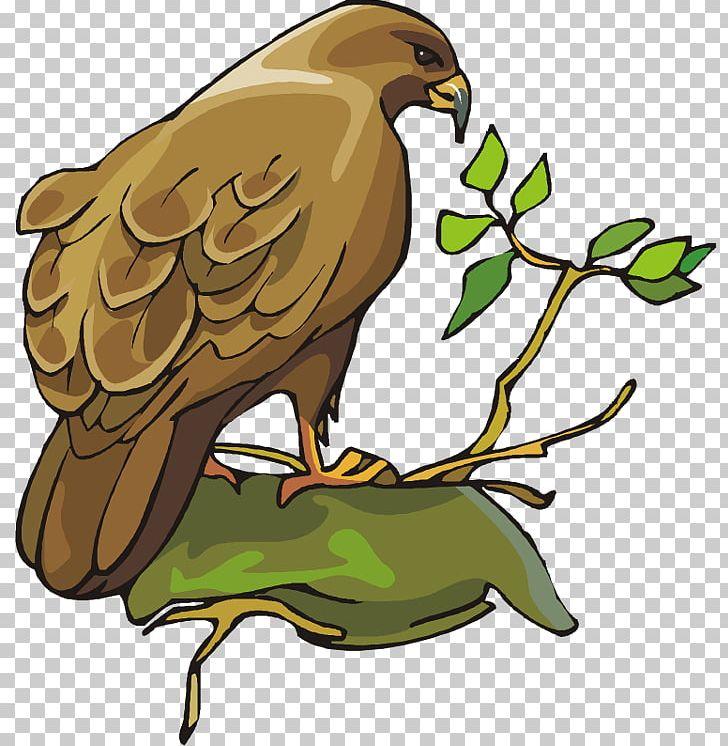 Bird Of Prey Bald Eagle Owl PNG, Clipart, Accipitridae, Bald.