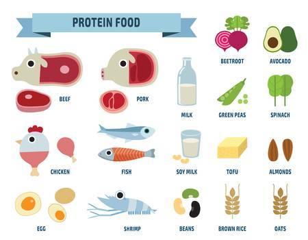 Protein clipart » Clipart Portal.