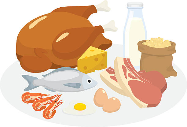 Vector pf protein diet products » Clipart Station.
