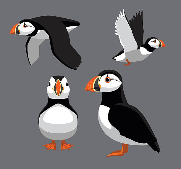 Best Puffin Illustrations, Royalty.