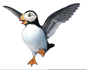 Cartoon Puffin Clipart.
