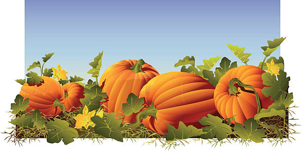 Best Pumpkin Patch Illustrations, Royalty.
