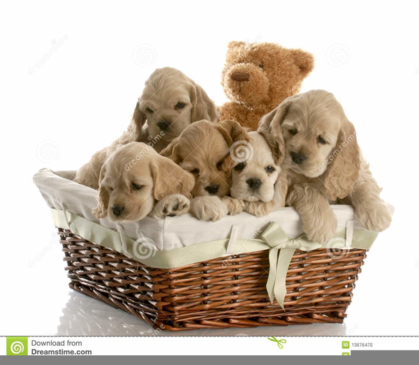 Clipart Puppies.