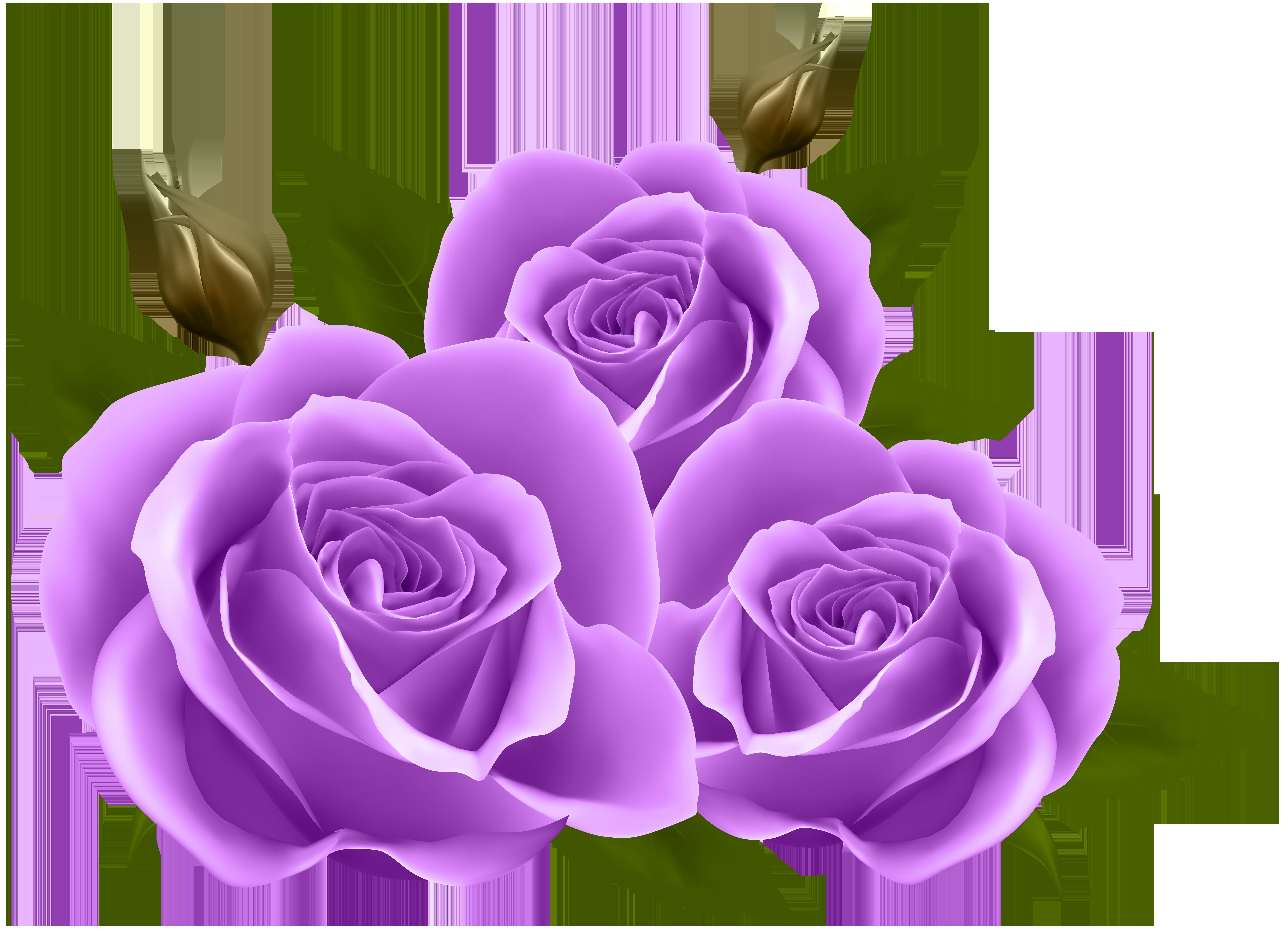 Purple Roses PNG Clip Art Image.