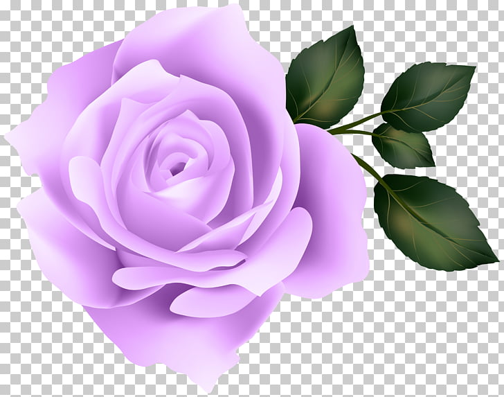 Rose Yellow , Purple Rose PNG clipart.