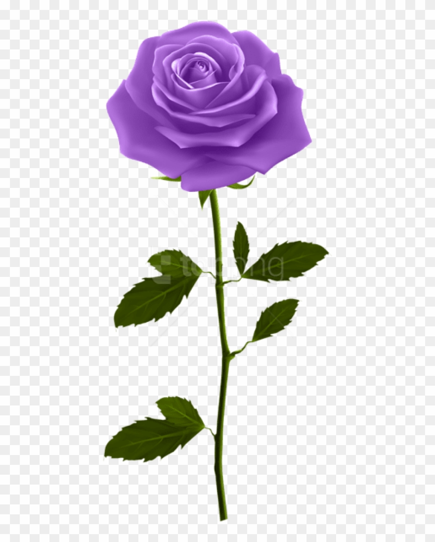 Free Png Download Purple Rose With Stem Png Images.