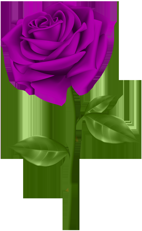 Purple Rose Transparent PNG Clip Art.