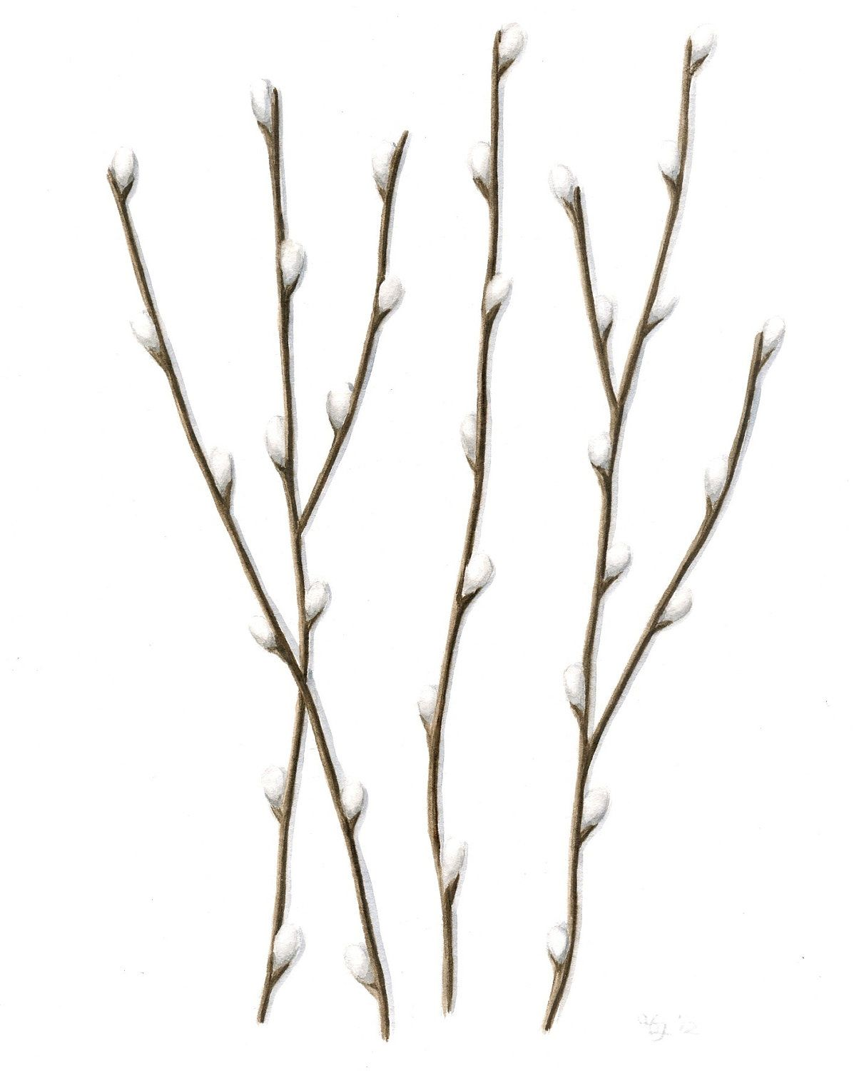 Original Watercolor Painting, Pussywillow Branches.
