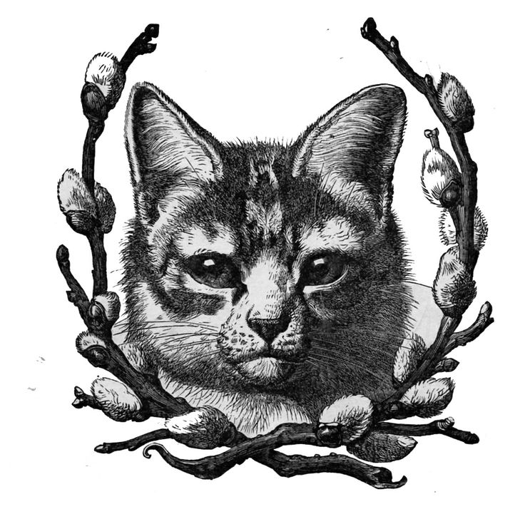 cat with pussywillow vintage clip art.