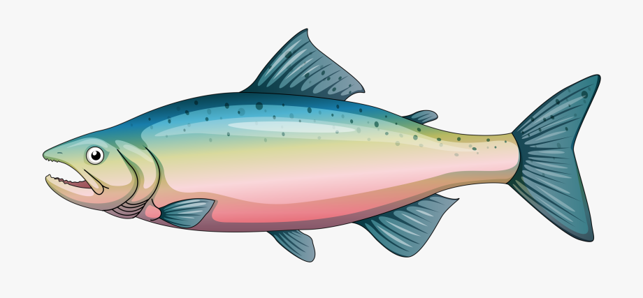 Rainbow Trout Clipart , Transparent Cartoon, Free Cliparts.