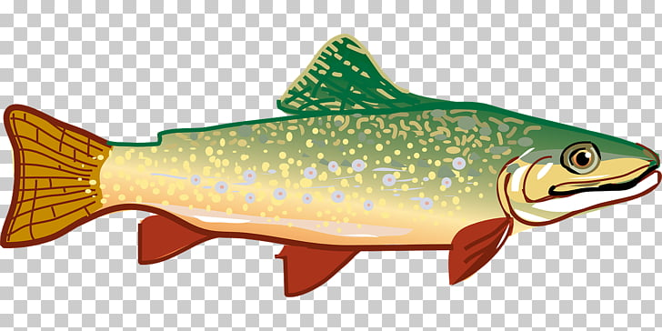 Rainbow trout , Slender fish PNG clipart.