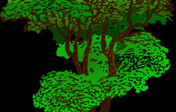 Rainforest Plants Clip Art.