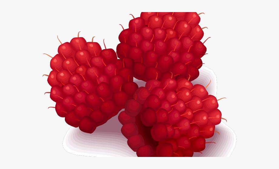 Raspberries Clipart , Transparent Cartoon, Free Cliparts.