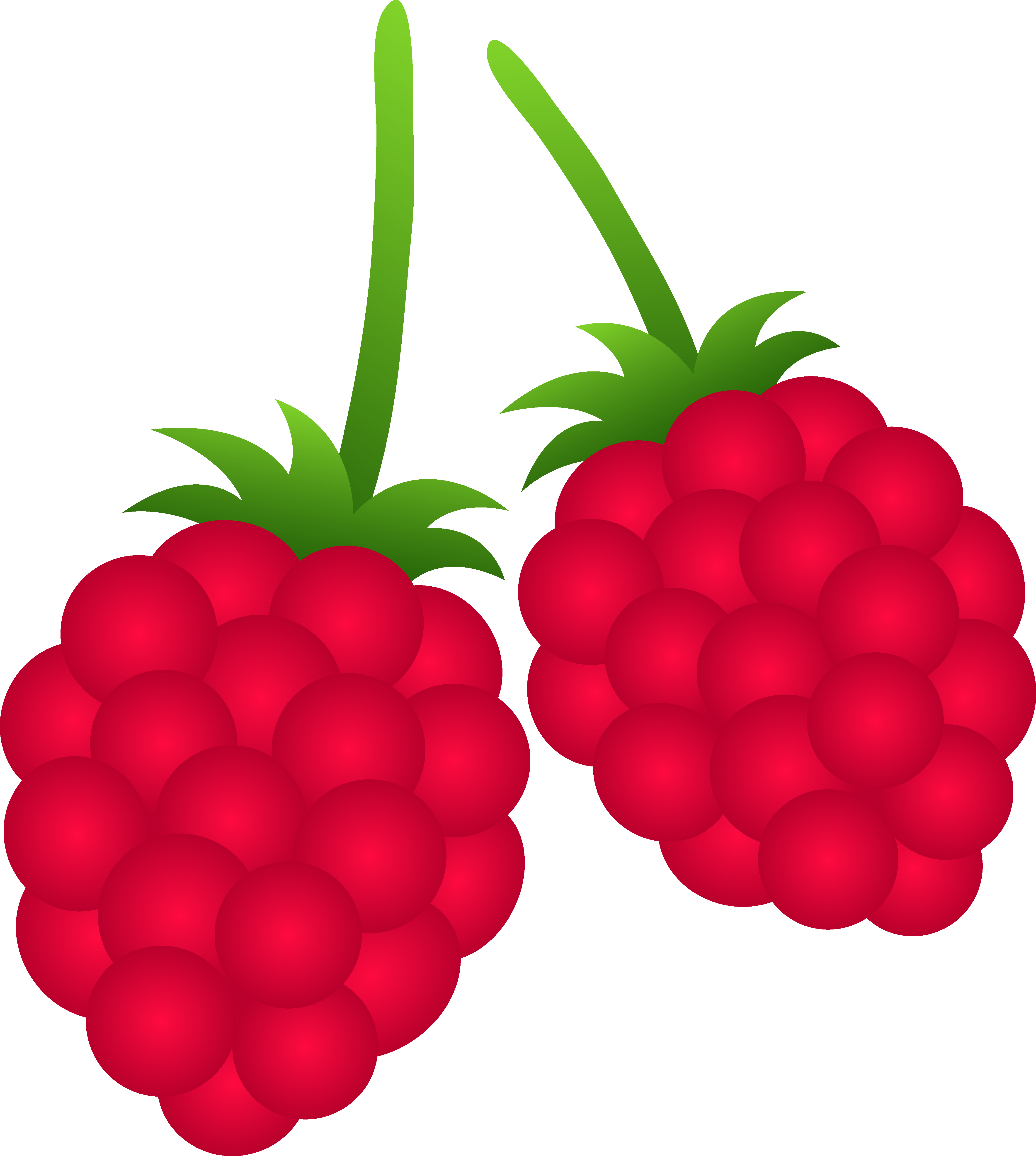 Free Raspberry Cliparts, Download Free Clip Art, Free Clip.