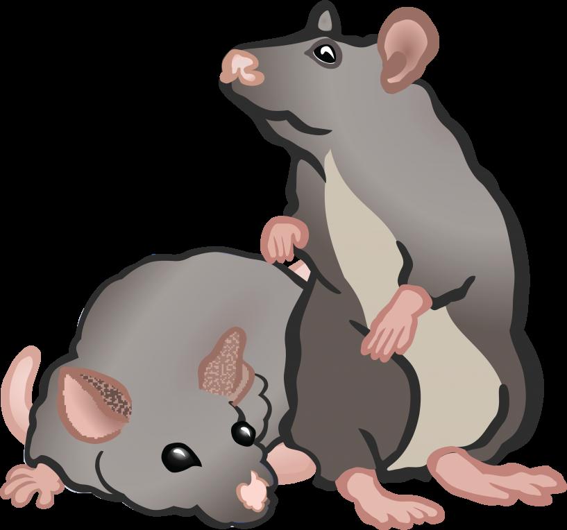 Rat clipart printable, Rat printable Transparent FREE for.