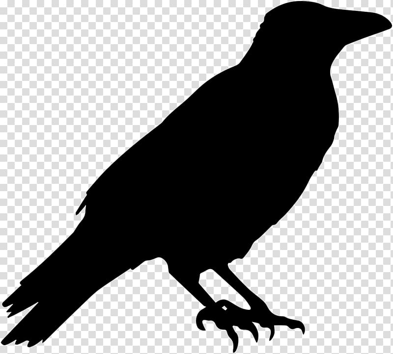 Common raven Crow Halloween , raven transparent background.