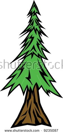 Redwood Tree Stock Images, Royalty.