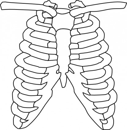 Free Ribs Cliparts, Download Free Clip Art, Free Clip Art on.