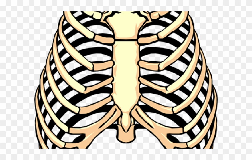 Rib Cage Png Transparent Images.