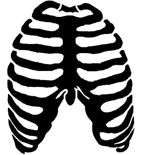 Skeleton Rib Cage.