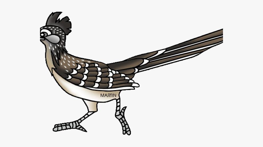 Bird Clipart Roadrunner.