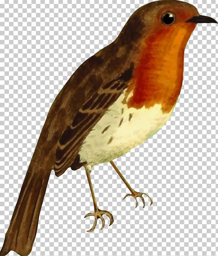 European Robin American Robin Bird PNG, Clipart, American.