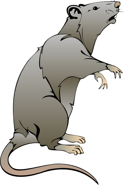 Cartoon Rat Drawings.