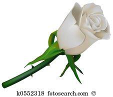 Rosa bianca Illustrazioni Royalty Free e Clipart. 17.472 rosa.