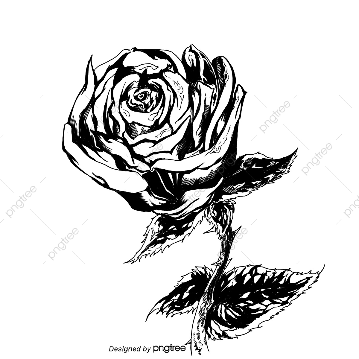 Black And White Rose, Rose, Black And White, Valentine S Day PNG.
