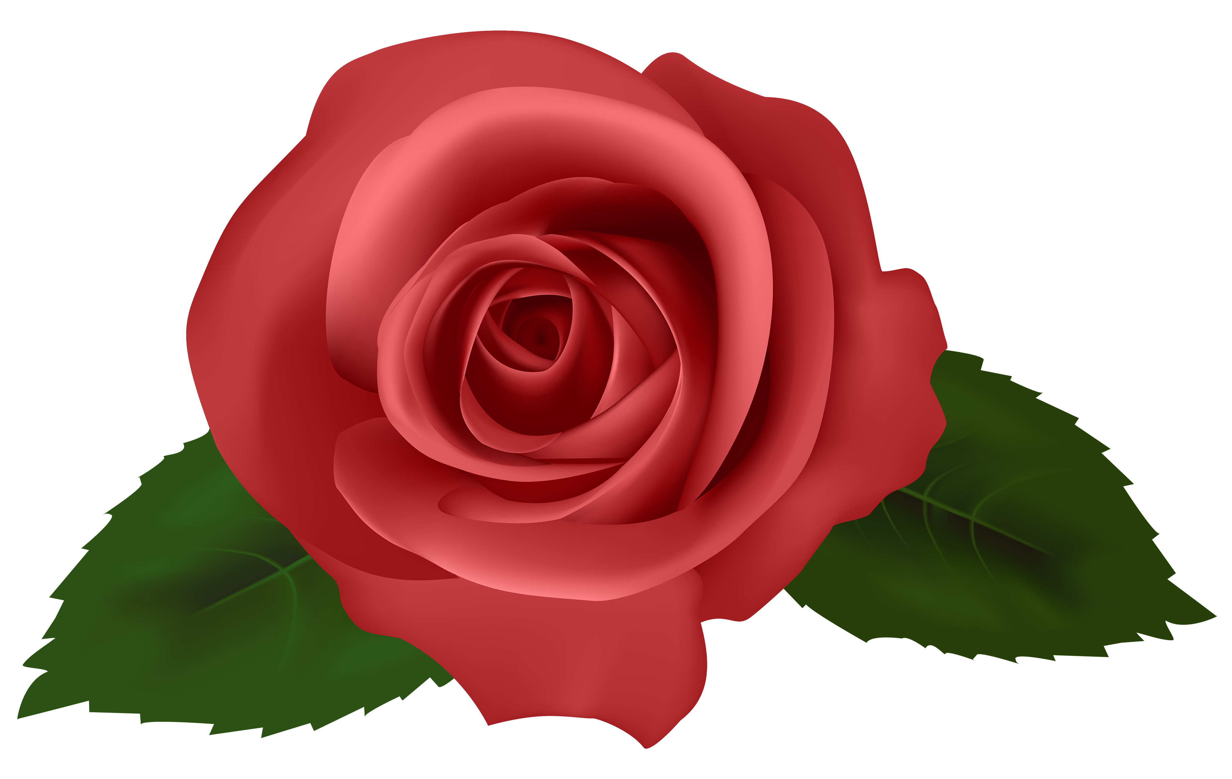 Rose Red PNG Clipart.