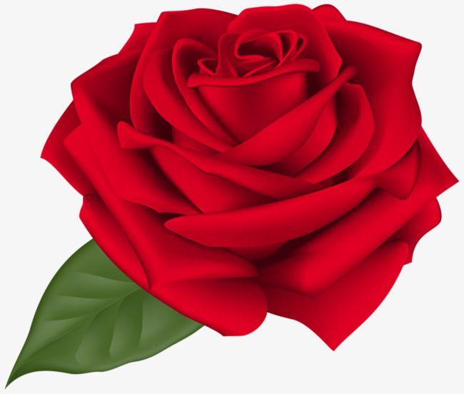 Cartoon Beautiful Roses in 2019.
