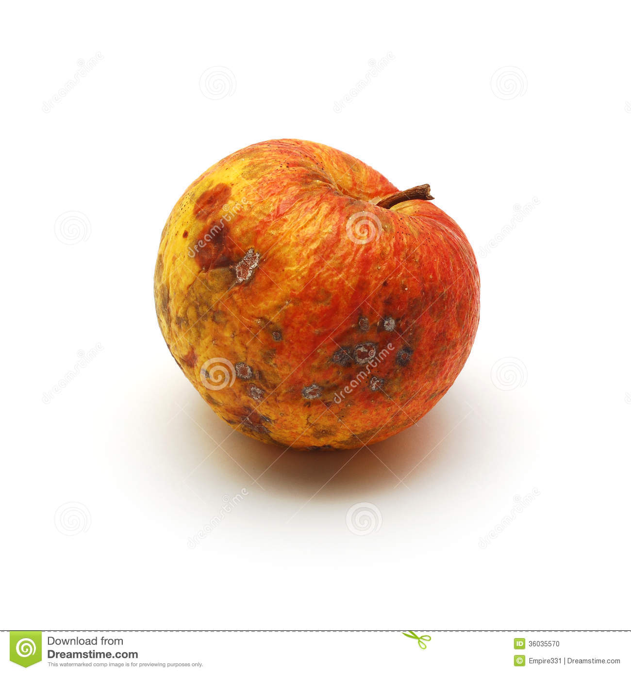 Rotten Apple Stock Photo.