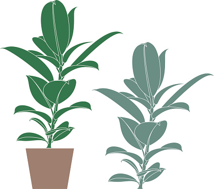 Free Sage Tree Cliparts, Download Free Clip Art, Free Clip.