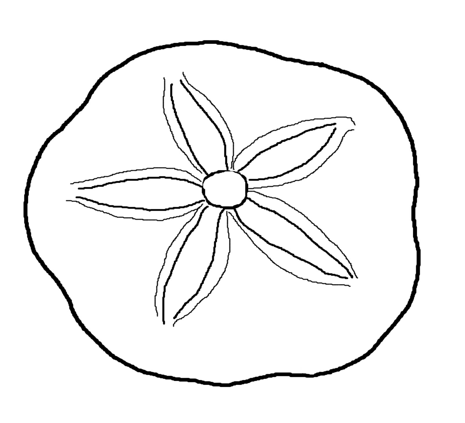 sea life clipart sand dollar.