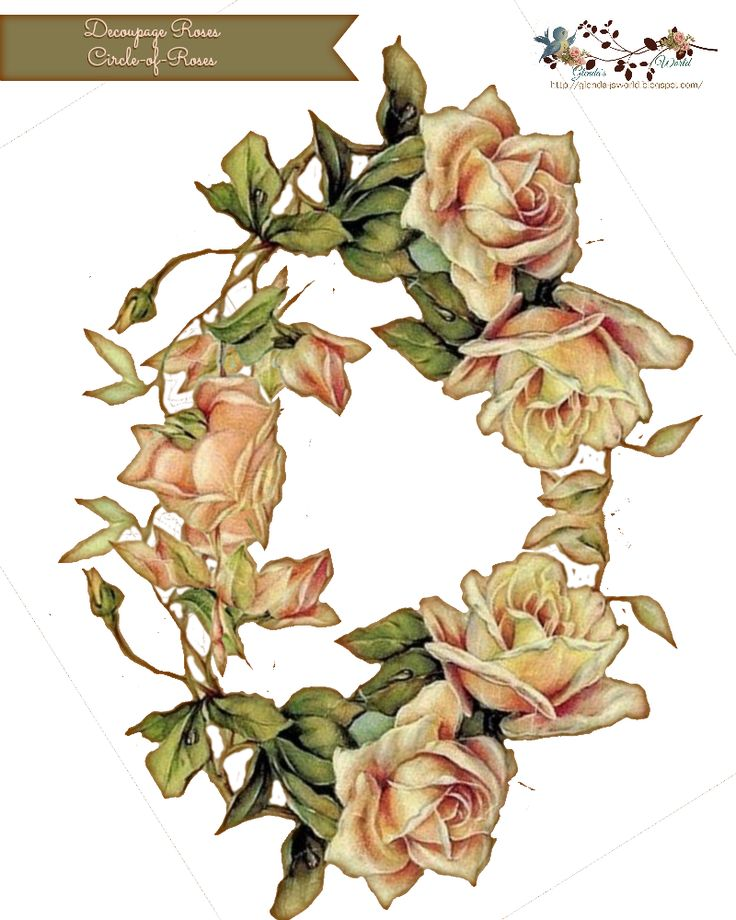 17 Best images about Rosas Roses on Pinterest.