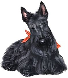 free scottish terrier clip art.