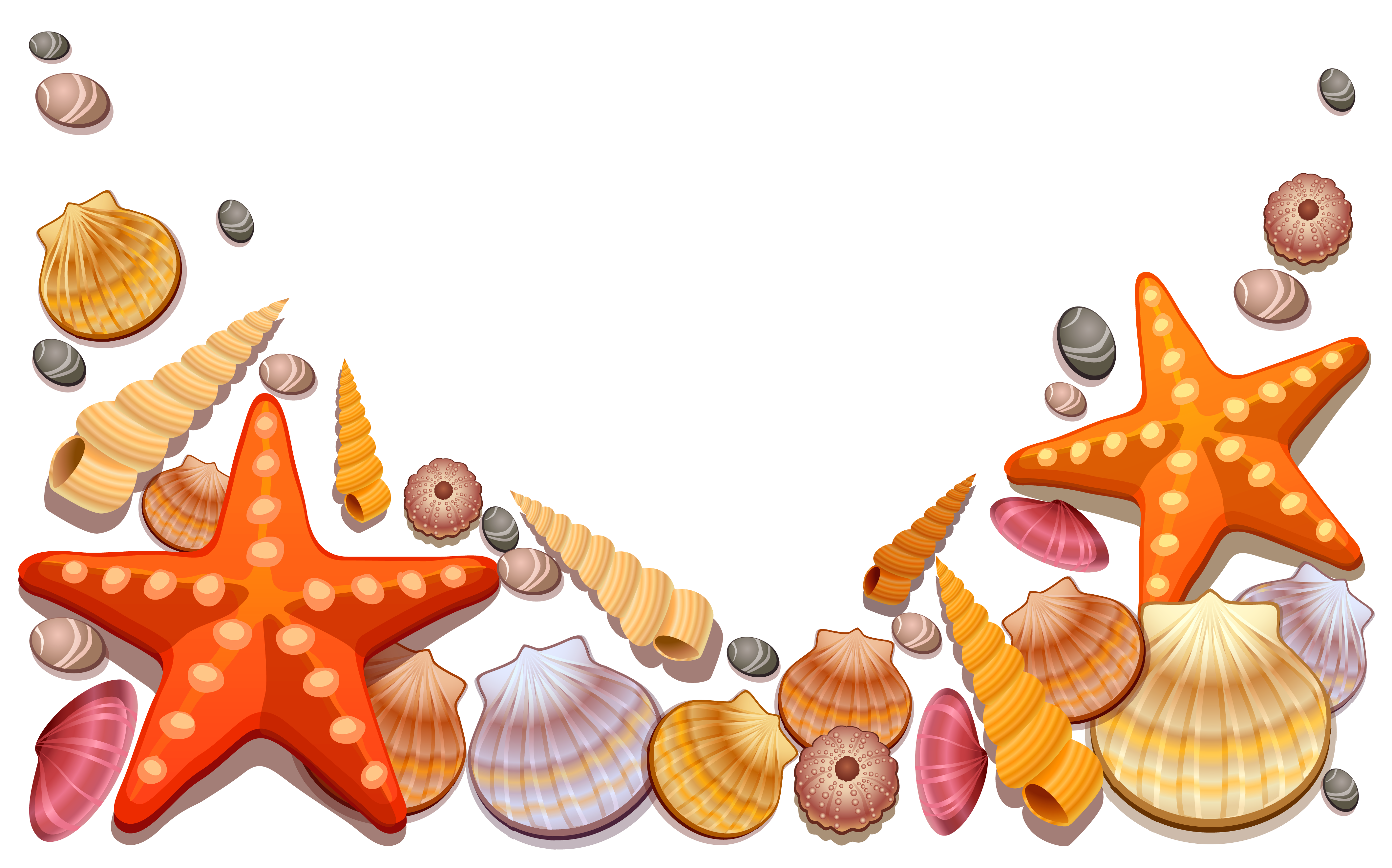 164 Sea Shells free clipart.