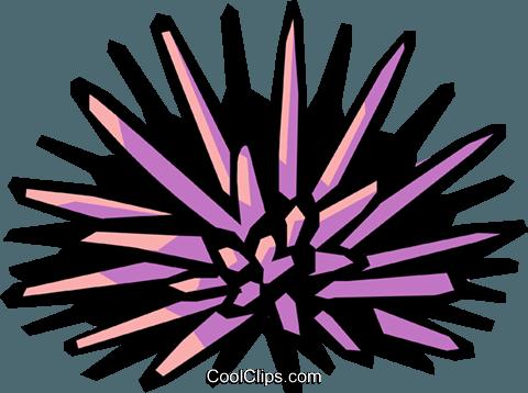 sea urchin Royalty Free Vector Clip Art illustration.